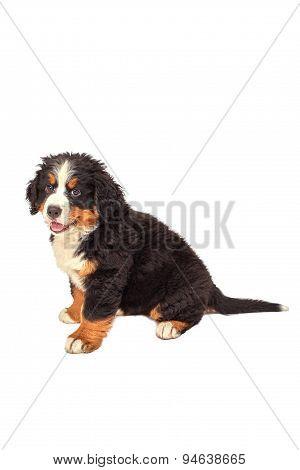 Dog Puppy Sitting