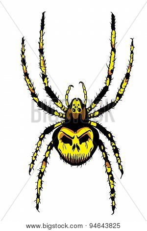 Spider Illustration