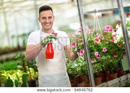 happy Male florist watering flower in glasshouse