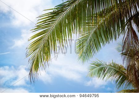 Green palm leaves on  blue sky