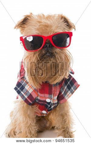 Dog In Red Glasses