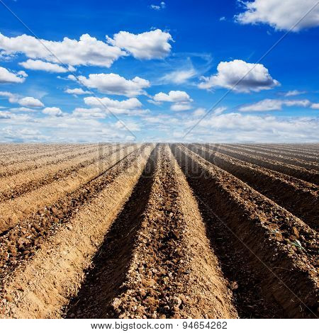 Soil Preparation For Cultivation Vegetable With Blue Sky
