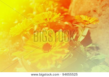 a colorful sparking flowers background  make you good when you see