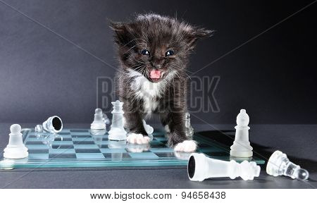 Meowng Kitten On Glass Chessboard With  Pieces