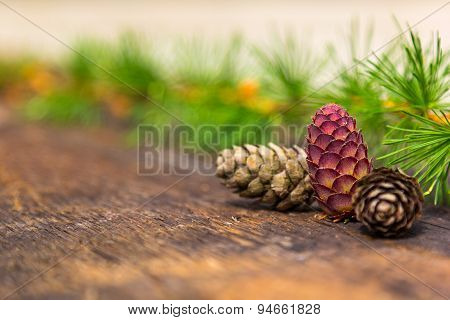Pine Cone And Branches On Wooden Background