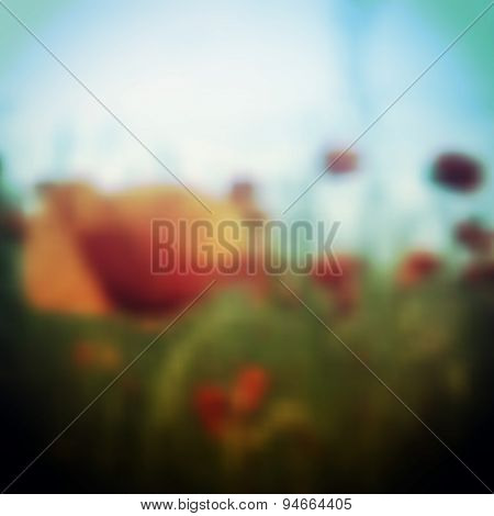 Blurred Poppy Flower Field Background Template