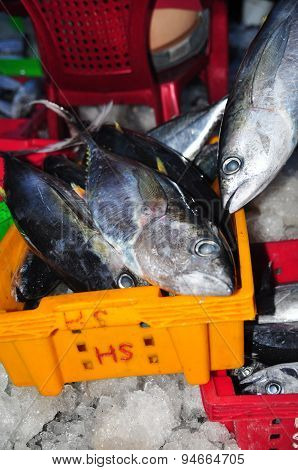 Nha Trang, Vietnam – February 21, 2013: Tuna Are Being Collected And Sorted Into Baskets After A Lon
