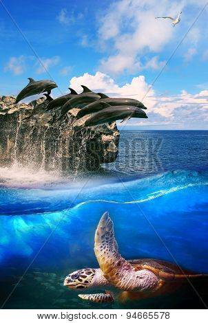 Turtle In Deep Sea Dolphin Junping And Sea Gull Flying Above Use For Natural Marine Life And Ocean W