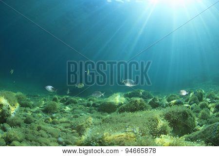 Underwater background with fish