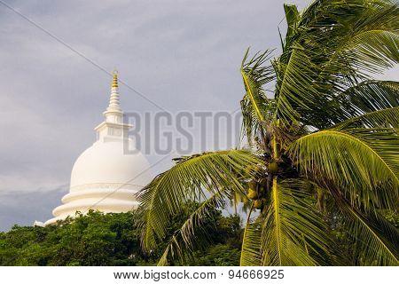 Top of Palm tree, Japanese peace pagoda on background, Unawatuna Sri Lanka