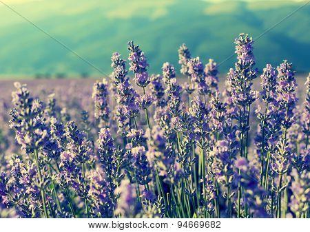 Vintage  Violet Lavender Flowers