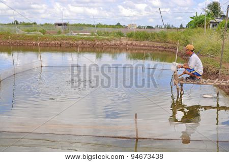Bac Lieu, Vietnam - November 22, 2012: A Farmer Is Feeding Fish In His Small Own Pond In The Mekong
