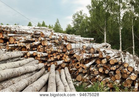 Wooden Logs with Forest on Background.