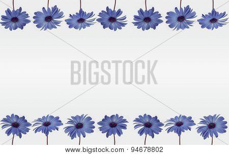 Flower decoration frame on white background