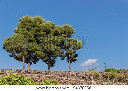 An Image Of Three Tree