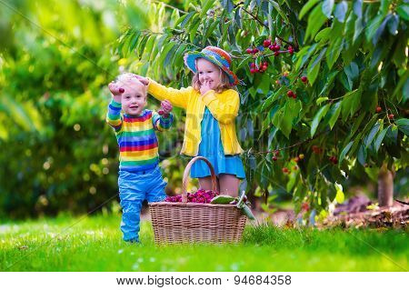 Kids Picking Cherry Fruit On A Farm