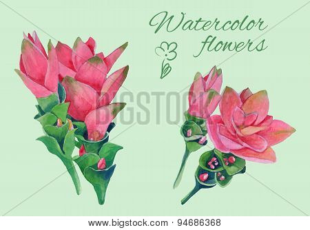 isolated floral elements of blossom of curcuma