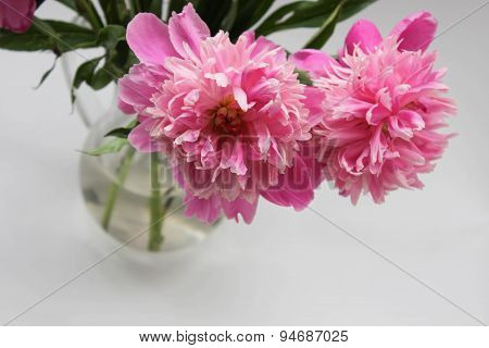 Pink peony in glass pitcher