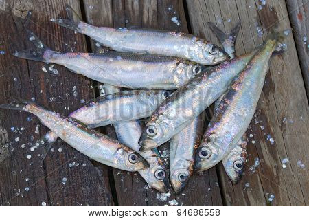 Group Of Baltic Herring