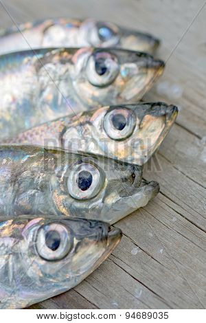 Heads Of Five Baltic Herring