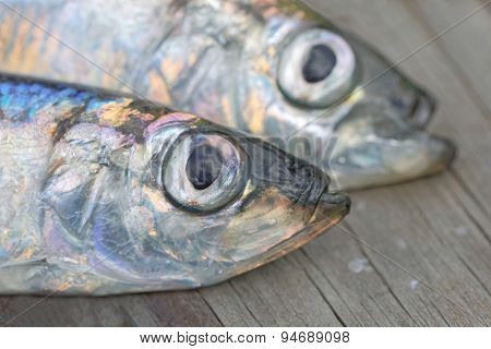Close-up Of Heads Of Two Baltic Herring