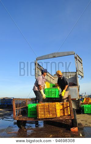 Lagi, Vietnam - February 26, 2012: Workers Are Loading Forage Fish Onto The Truck To The Feed Mill I