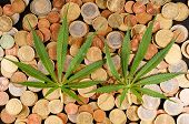 foto of cannabis  - Picture of Marijuana and Money Cannabis Business Concept - JPG
