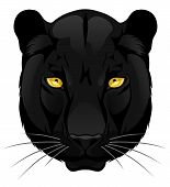 foto of panther  - Vector head of panther on the white background - JPG