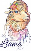 picture of lamas  - isolated image of cute lama with flower and scarf - JPG