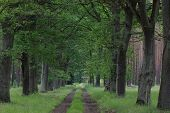 picture of dirt road  - The photograph shows the forest - JPG