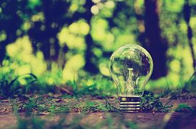 stock photo of ecology  - Lamp in forest is a symbol of ecology  - JPG