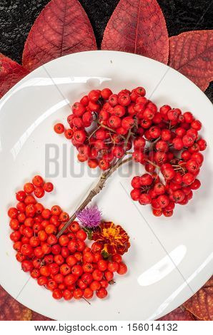 rowan berries in autumn, fall, rowanberry, ash-berry,