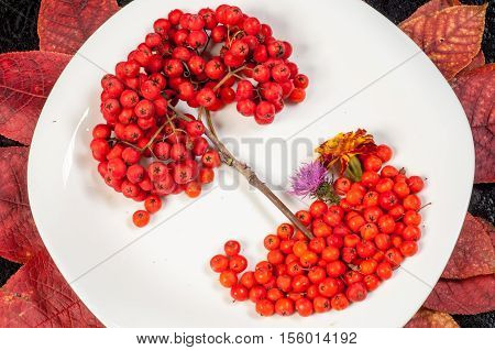 Rowan Berries In Autumn