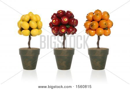 Lemon, Apple, Orange Tree