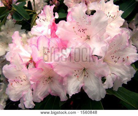 Like A Bridal Bouquet