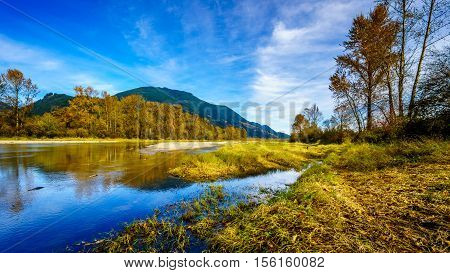 Fall Colors around Nicomen Slough, a branch of the Fraser River, as it flows through the Fraser Valley of British Columbia, Canada