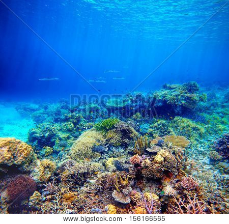 Underwater scene. Coral reef colorful fish and sunny sky shining through clean ocean water. Space underwater for you to fill or just use standalone. High res