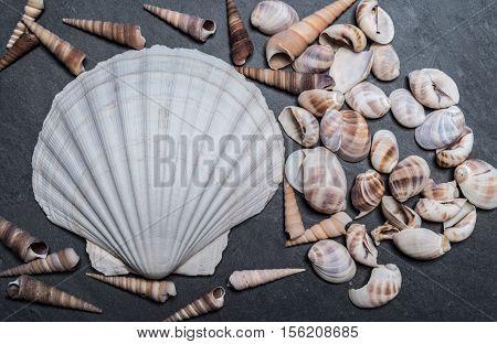 Shells on the stone, scallop sea shells, background, scallop shell, white shell on black stone, white shell, Marine Seashell, molluscs