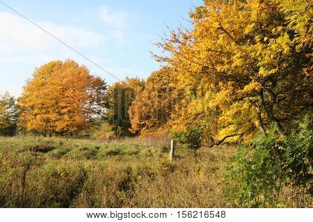 Enclosed autumn colors in the lovely October