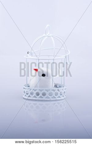 White dove in the cage Pigeon locked in a cage on a white background