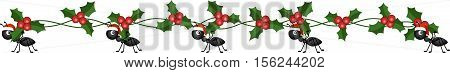 Ants on the march to deliver Christmas holly branch