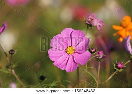 Colorful Prairie Wildflowers in reclaimed habitat showing beautiful color