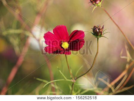 Wildflowers in restored habitat showing beautiful colors