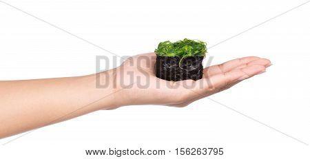Hand Holding Sushi Pieces Isolated On White Background