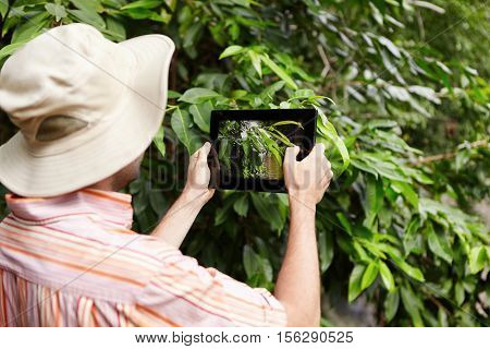 Protection And Conservation Of Natural Resources. Rear Shot Of Scientist In Panama Hat And Shirt Hol