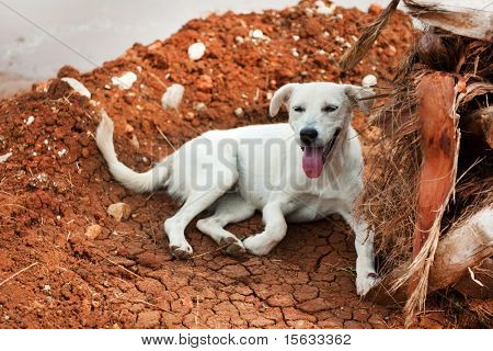 white Greek stray dog laying near a palm tree