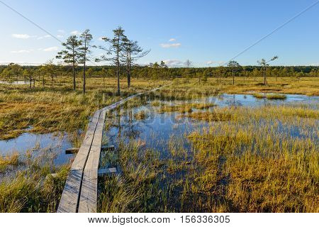 Bog landscape with boardwalk, nice summer day.
