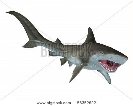 Tiger Shark Jaws 3D Illustration - The Tiger Shark is a large predatory fish and is found in tropical and temperate ocean waters.