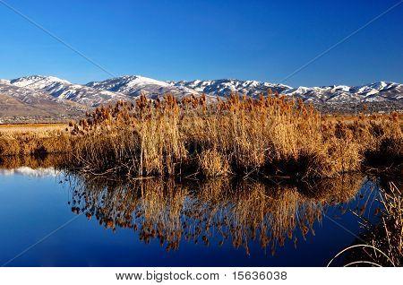 Reflective wetlands