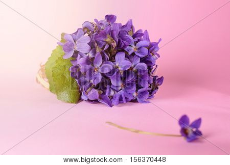 beautiful spring flowers bouquet of violets, viola on a pink background